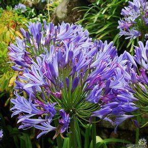 gehaakte bloemen zeshoek deken 25 beste idee 235 n over afrikaanse bloemen op pinterest