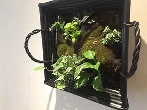 Créer Un Cadre Photo : cr er un cadre v g tal un tableau v g tal fait maison jardinier pro ~ Melissatoandfro.com Idées de Décoration