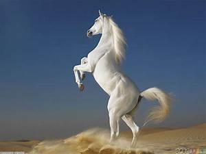 White horse wallpaper #12598 - Open Walls