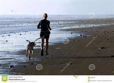 young woman  dog running stock image image