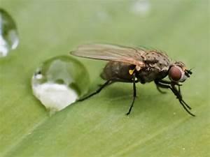 Hausmittel Gegen Mücken In Der Wohnung : mit diesen hausmitteln vertreiben sie ruckzuck die fliegen ~ A.2002-acura-tl-radio.info Haus und Dekorationen