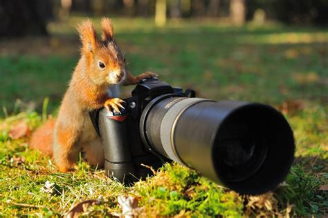tips  wildlife photography homesteading