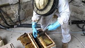 Essaim De Frelon : sauvetage de l 39 essaim d 39 abeilles attaqu par les frelons ~ Melissatoandfro.com Idées de Décoration