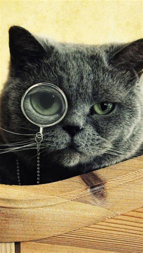 cat monocle glasses iphone  wallpaper hd