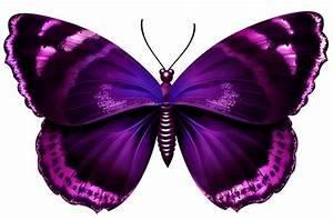 Purple Butterfly Cliparts | Free download best Purple ...