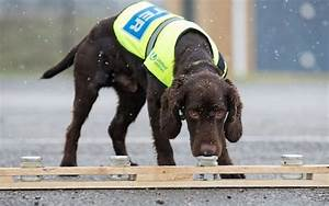 Britain's first water sniffing dog hired to pinpoint leaks ...