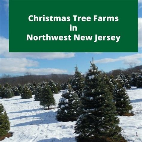 tree farms in south jersey 17 best images about on cing resort snowman handprint ornament and