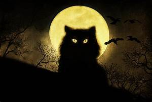 Black Cat Digital Art by Hazel Billingsley