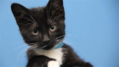 cat friday  winnipeg humane society manitoba
