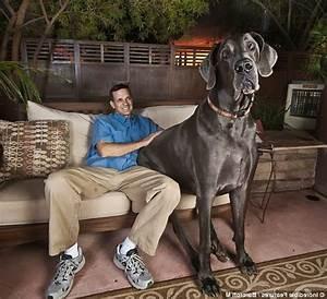 Biggest Breed Of Dog - Dog Training Home | Dog Types