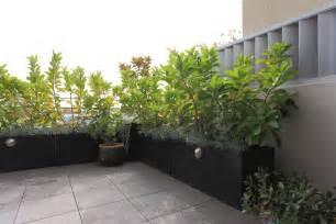 balkon belag sichtschutz mit pflanzen balkon sichtschutz aus pflanzen terrasse hause dekoration nowaday garden