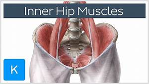 Inner Hip Muscles  Preview  - Human Anatomy