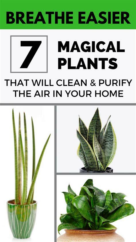 breathe easier  magical plants   clean