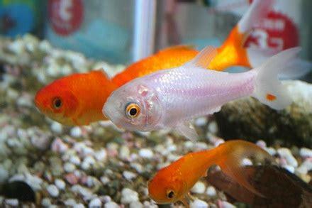 pet fish  children  quick guide