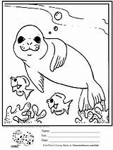 Coloring Seal Pages Animal Popular Ages sketch template