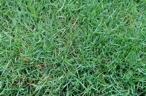 Zoysia Turf Grass For Sale In Tunapuna/piarco