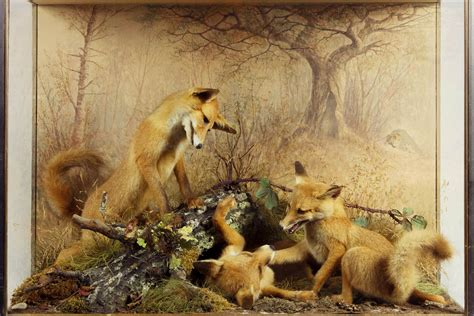 Making Nature How We See Animals Geographical