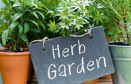 tanaman herbal  ampuh merawat kesehatan  kecantikan