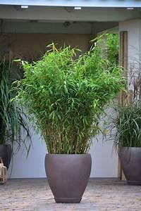 Bambus Pflanzen Kübel : bambus im k bel da ger t er nicht so au er kontrolle mehr garten garden garden plants ~ Frokenaadalensverden.com Haus und Dekorationen