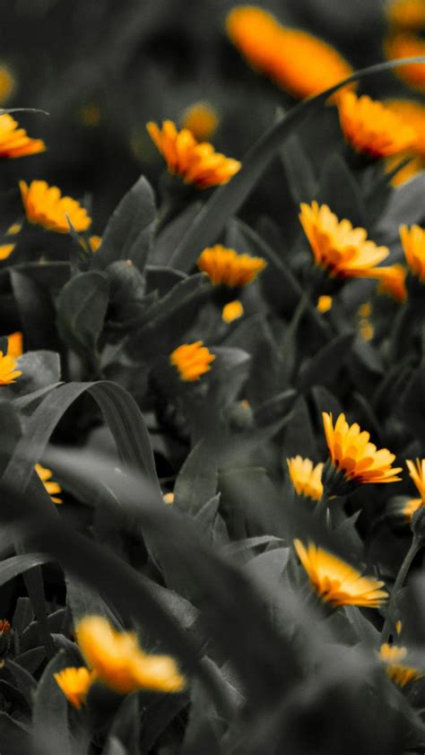 black orange flowers android wallpaper