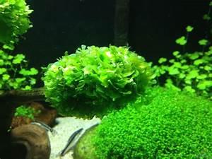Pflanzen Im Aquarium : example no 27280 from the category aquascaping ~ Michelbontemps.com Haus und Dekorationen