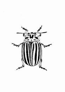 Kleine Fliegen In Der Erde : colorado bug beetle illustration ink drawing pen drawing from etsy kartoffelk fer k fer ~ Frokenaadalensverden.com Haus und Dekorationen