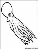 Squid Coloring Drawing Cartoon Printable Getdrawings sketch template