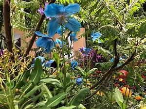 Chelsea Flower Show 2018 : rhs chelsea flower show 2018 highlights the english garden ~ Frokenaadalensverden.com Haus und Dekorationen