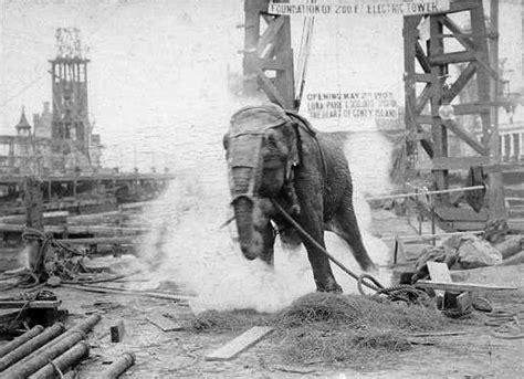 file topsy elephant death electrocution at luna park 1903