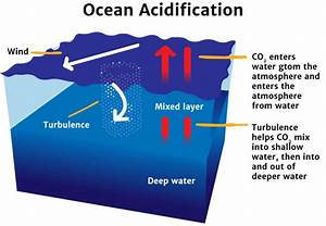 Ocean Acidification - Knowledge Bank