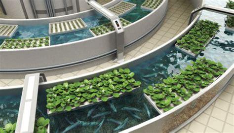 aquaponics  vertical farming freeborn blog