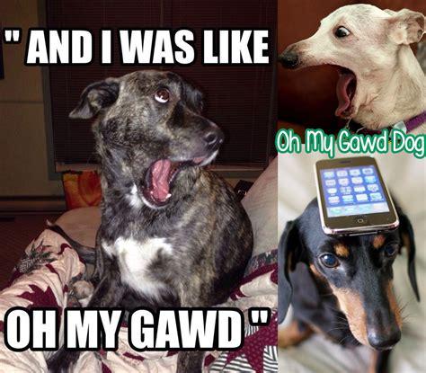 randomly funny   gawd dog yayomg