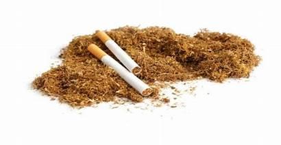 Tobacco Natural Health Risks Associated