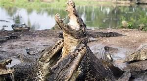 U0026 39 Can U0026 39 T Bribe Crocodiles U0026 39   Indonesia May Use Reptiles As Prison Guards  U2014 Rt News