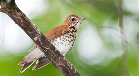 tracking trends in bird populations the kojo nnamdi show