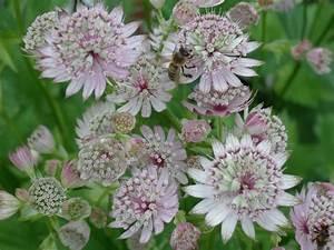 Pflanzen Für Nordseite : bl tenf lle ohne schnecken mein sch ner garten ~ Frokenaadalensverden.com Haus und Dekorationen