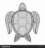 Coloring Adults Turtle Pages Adult Sea Native American Baby Leatherback Animals Mascot Tribal Drawn Hand Turtles Animal Doodle Vector Printable sketch template
