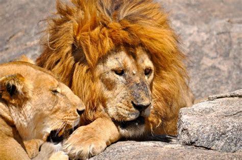 Tanzania Safari Photos