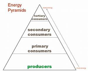 energy pyramid trophic levels Quotes