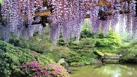 pond background flowers garden pond wisteria hd wallpapers free hd wallpaper