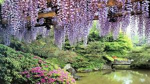 flowers garden pond wisteria