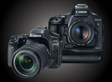 best dslr for photography top dslr cameras for wildlife photography outdoor