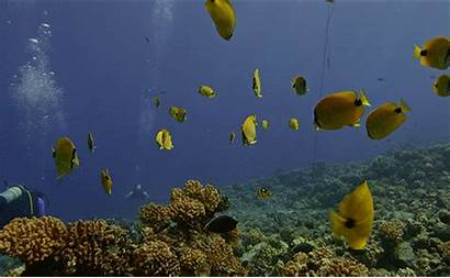 Coral Reefs Ocean Marine Office Without Its