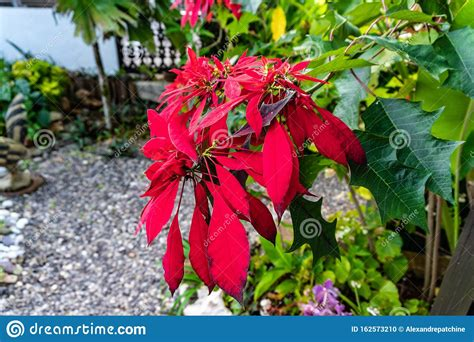 Combine white flowers with fall hues like oranges and reds to embrace the season's colors. Nine Mile, Jamaica JANUARY 07, 2017: Beautiful Flowers The ...