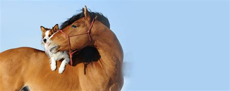 pferde op versicherung bernsdorf vmde