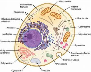 Each Part Of A Cell Diagram