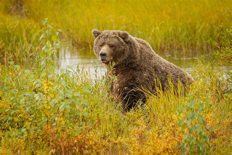The 4 Biggest Bears Known to Have Ever Walked the Earth