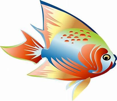 Fish Clipart Fin Clip Colorful Dream Transprent