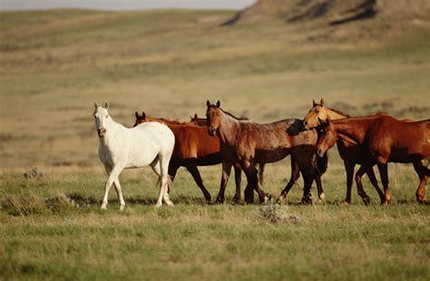 horse breeds horses native american quarter indian appaloosa nation pasture jules frazier photograph horsenation exhibitions si edu teke akhal americanindian