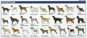 Is Rex a Dog?: Dog Breeds